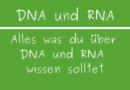 DNA und RNA