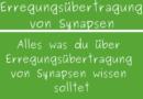 Erregungsübertragung von Synapsen