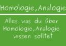 Homologie, Analogie