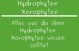 Hydrophyten Xerophyten