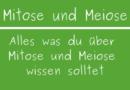 Mitose und Meiose