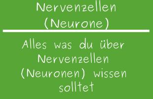 Nervenzellen (Neurone)