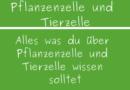 Pflanzenzelle und Tierzelle