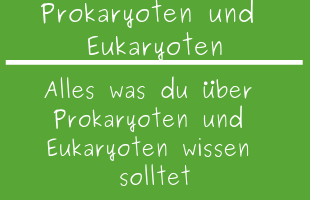 Prokaryoten und Eukaryoten